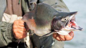 Kenai river - Storage Space In Alaska